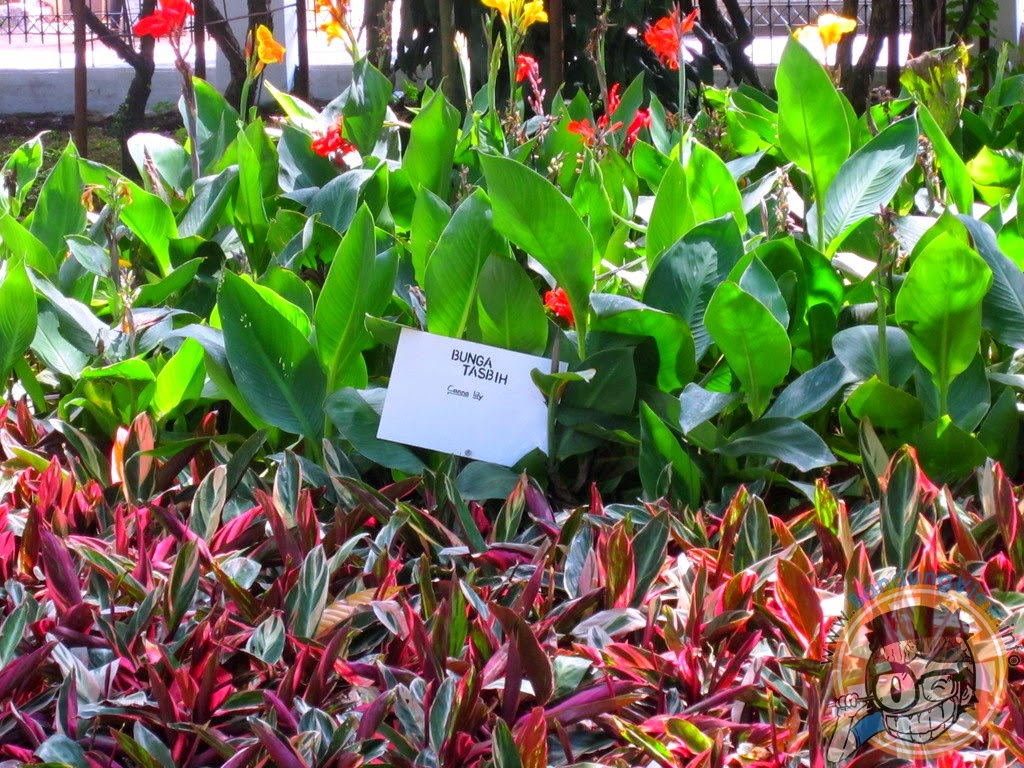 Bunga tasbih - Taman pustaka bunga kandaga puspa