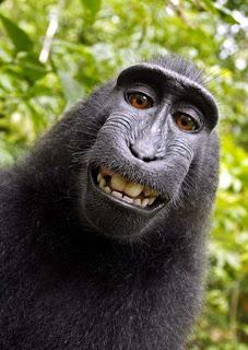 Narsis Foto Tersenyum Seekor Monyet Hitam Sulawesi yang Mendunia - www.iniunik.web.id