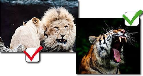 Leões - Mordida mais forte