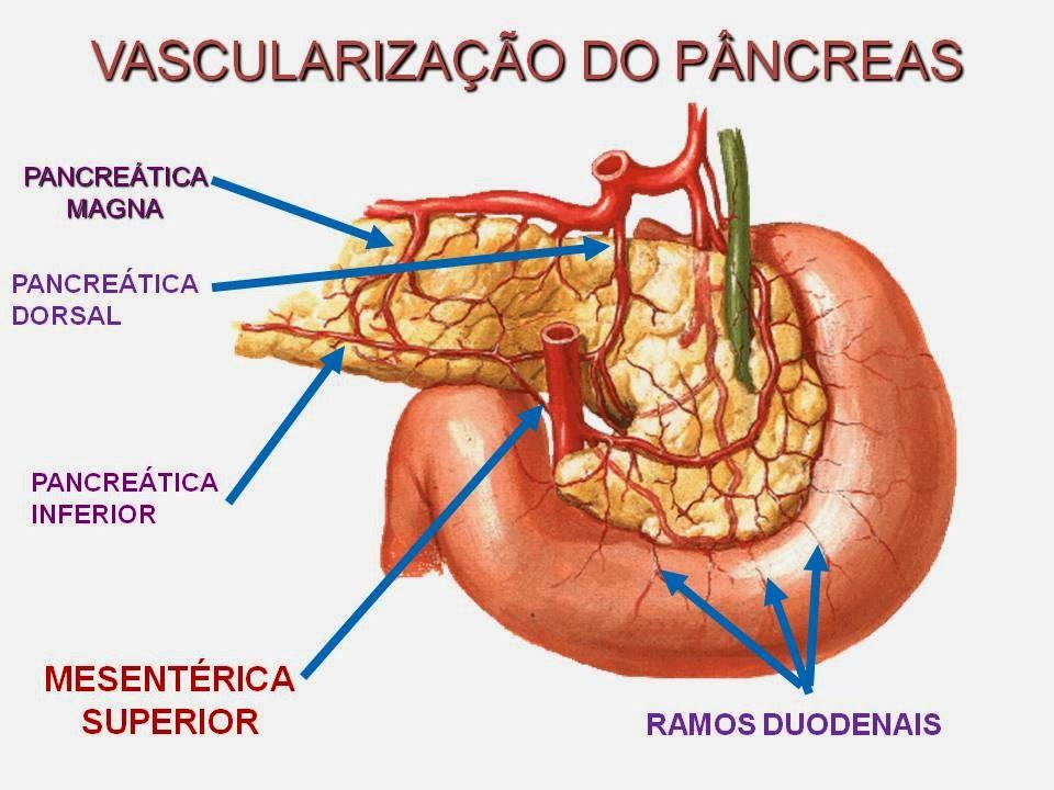 Moderno Foto Páncreas Anatomía Ornamento - Imágenes de Anatomía ...