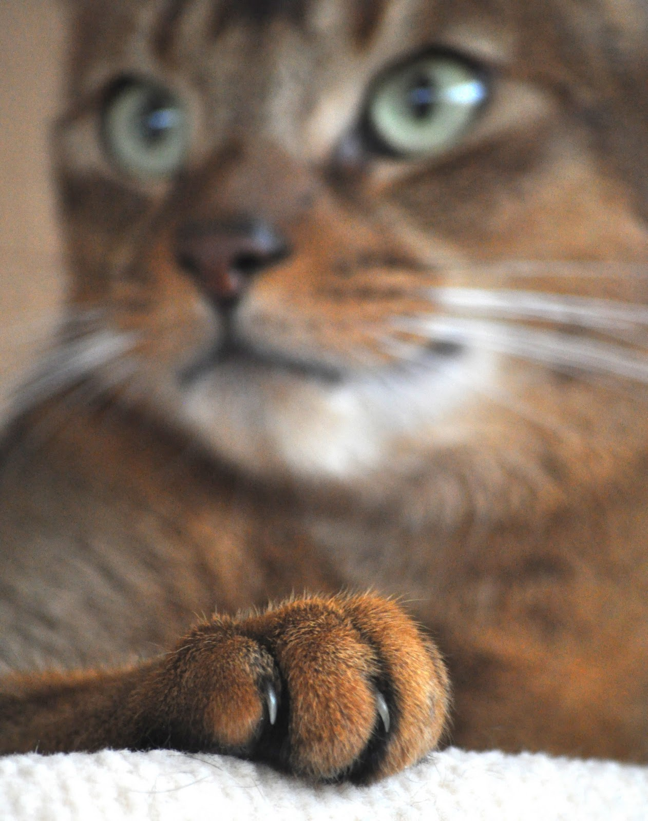 free cat images neues aus dem leben mit unseren katzen eine glosse. Black Bedroom Furniture Sets. Home Design Ideas