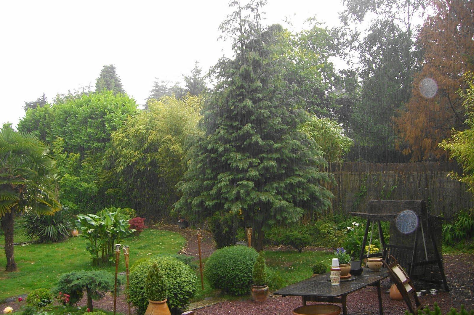 Il pleut en normandie comme vache qui pisse jadeique - Il pleut dans ma maison ...