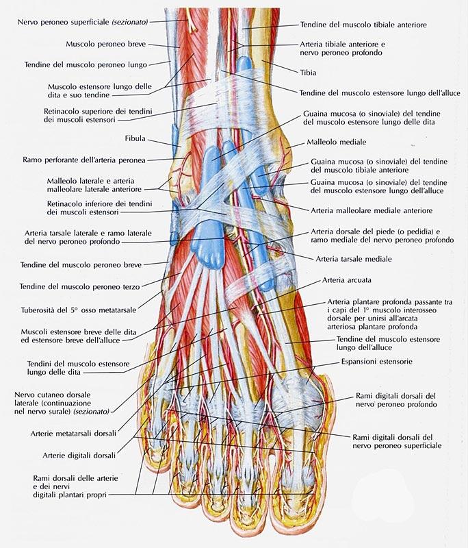 dolore dorso piede sinistro