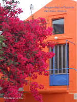 Bougainvillea in Fiscardo on the island Kefalonia in the Ionian Islands of Greece. Copyright Liz Alvey 2013