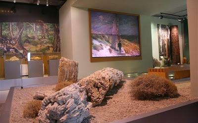 Έκθεση με νέα σημαντικά ευρήματα στο Μουσείο Απολιθωμένου Δάσους Λέσβου
