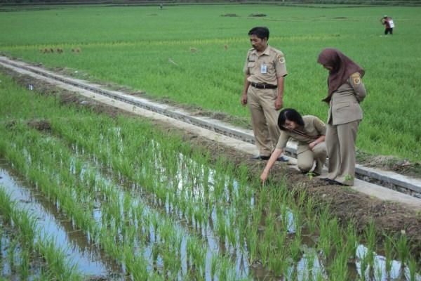 Kementerian Pertanian Buka Lowongan Cpns 2016 Untuk Thl Tb Penyuluh