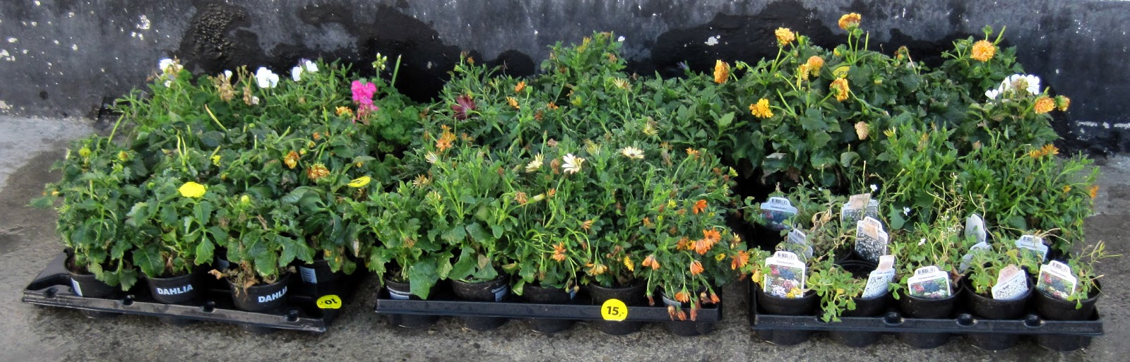 planter rema 1000