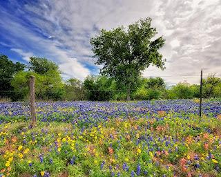 campo de flores silvestres