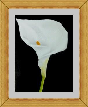 dibujo acuarela plumilla tecnica mixta pintura flor cala planta