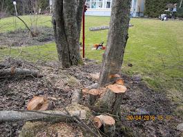 Pihapuiden kaadot Tampere Pirkanmaa talaousalueella käteisellä, kotitalousvähennysoikeus