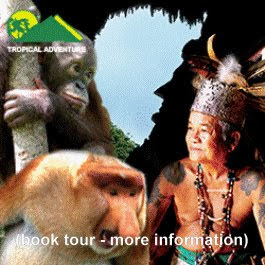 Click on Image below for Tours in Borneo: