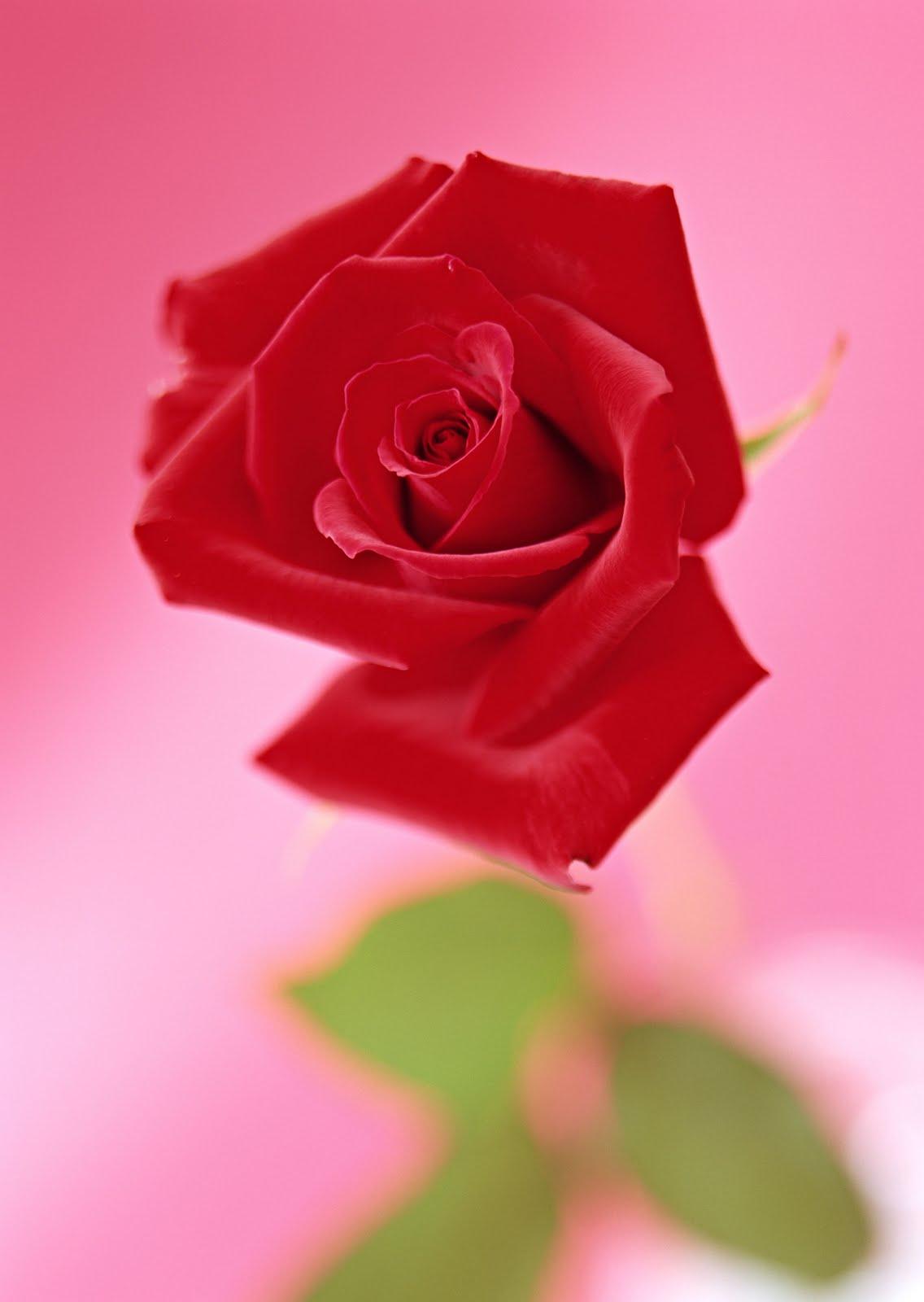tucci flower
