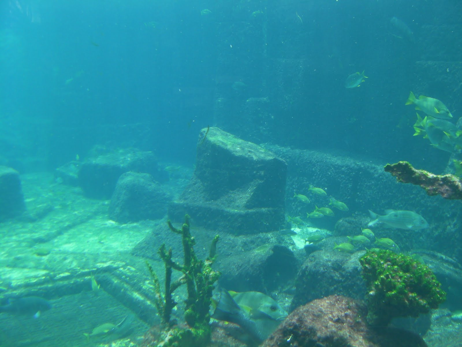 Real Underwater Ruins Number One London: Sno...