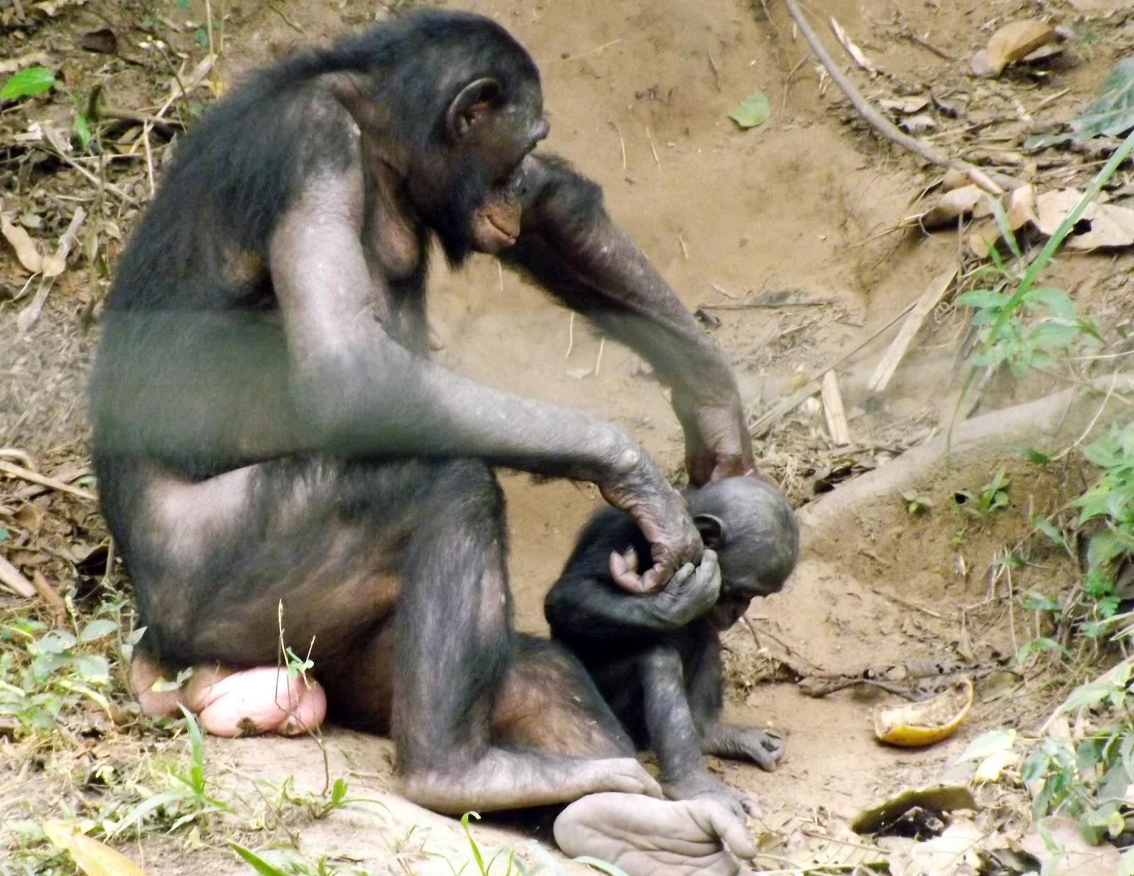 Секс машина обезьянка своими руками 1 фотография