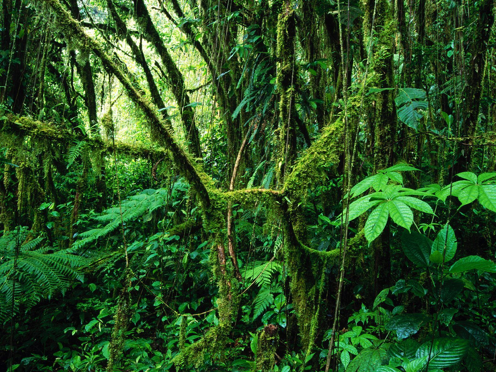 Rainforest wallpaper hd