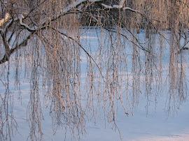 Rimfrost i hängbjörk, januari 2013