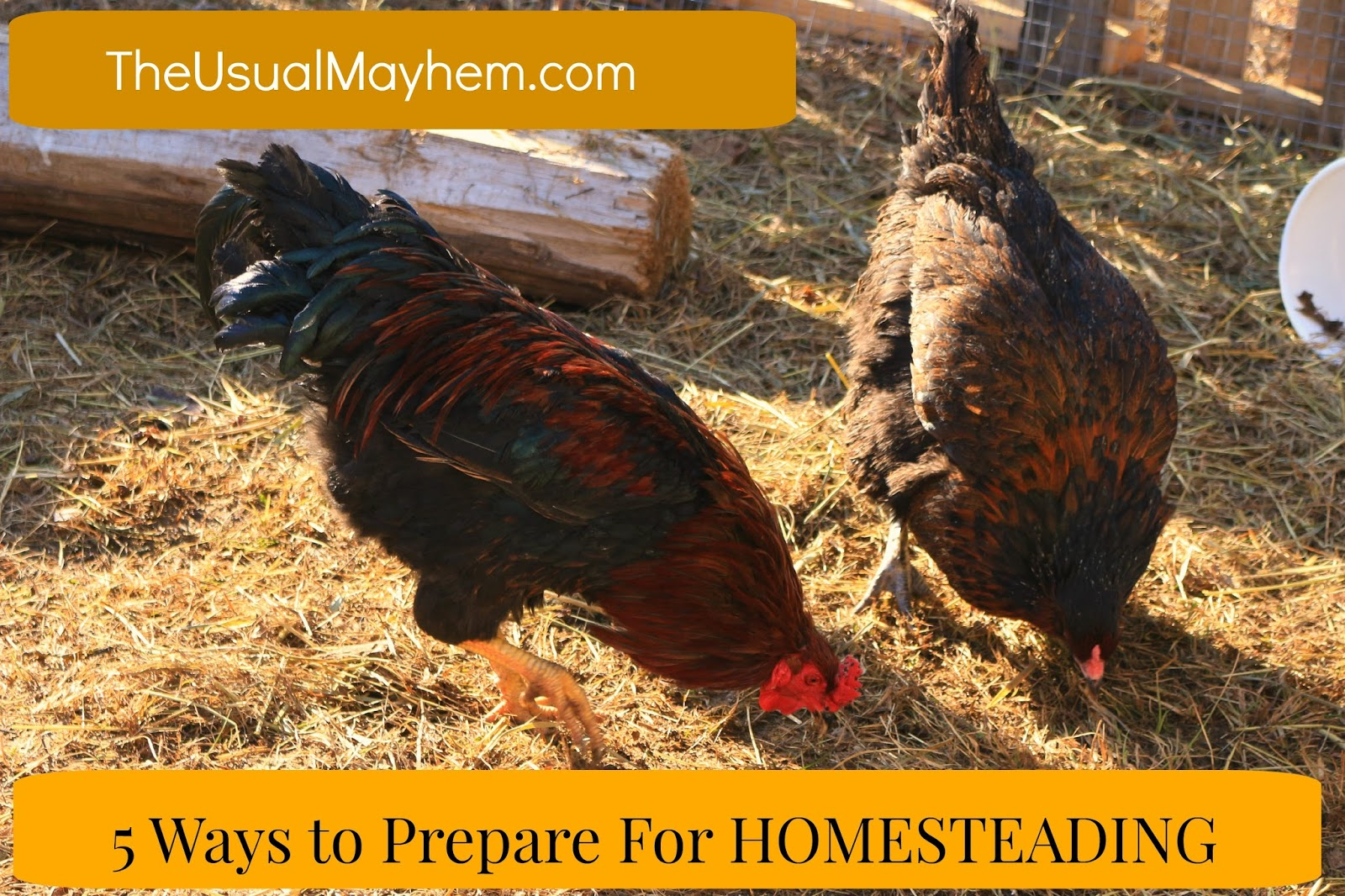 5 Ways to Prepare For Homesteading (while waiting for your dream ...