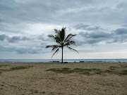 Lone tree, Kailua-Kona