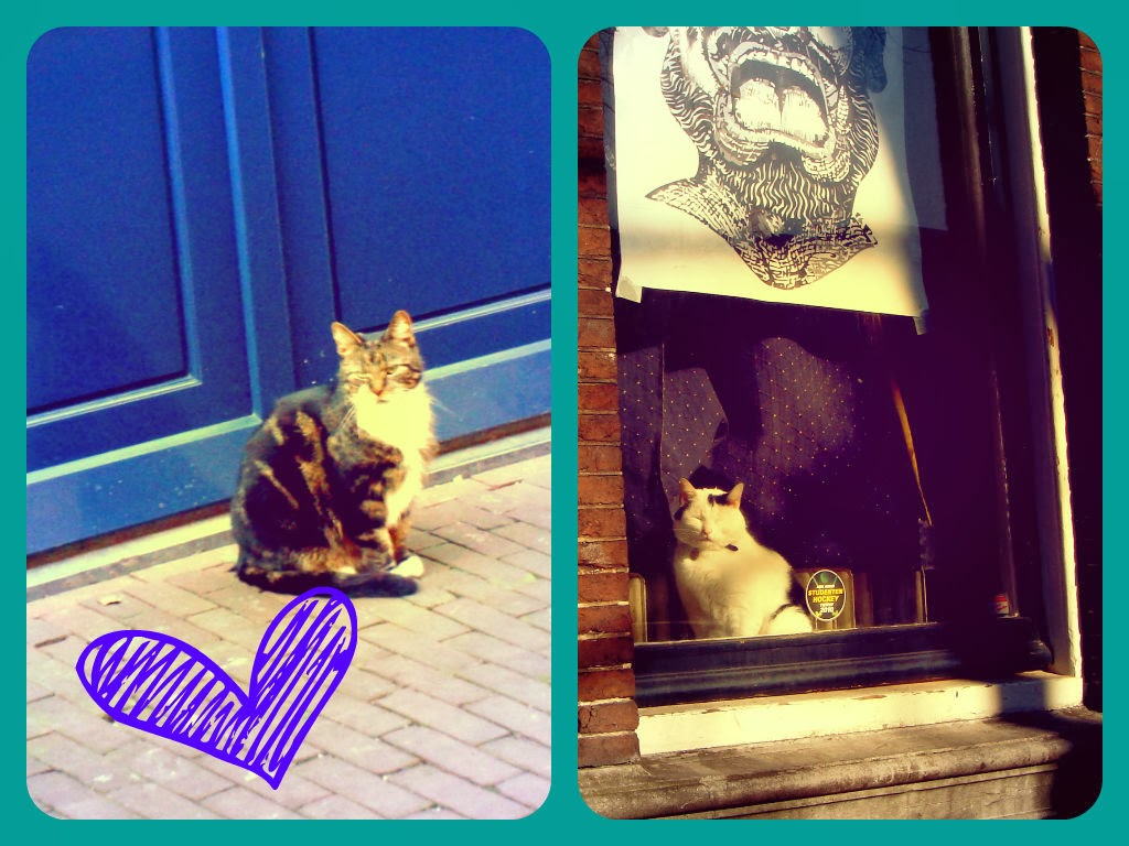 Amsterdam - Cats