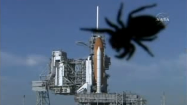 Spider attacking Atlantis mission