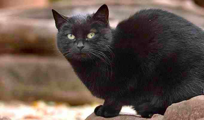 Blackie - the richest cat in the world