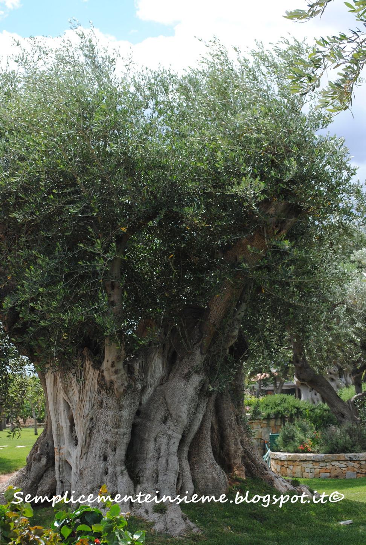 Green Olive Tours Tripadvisor