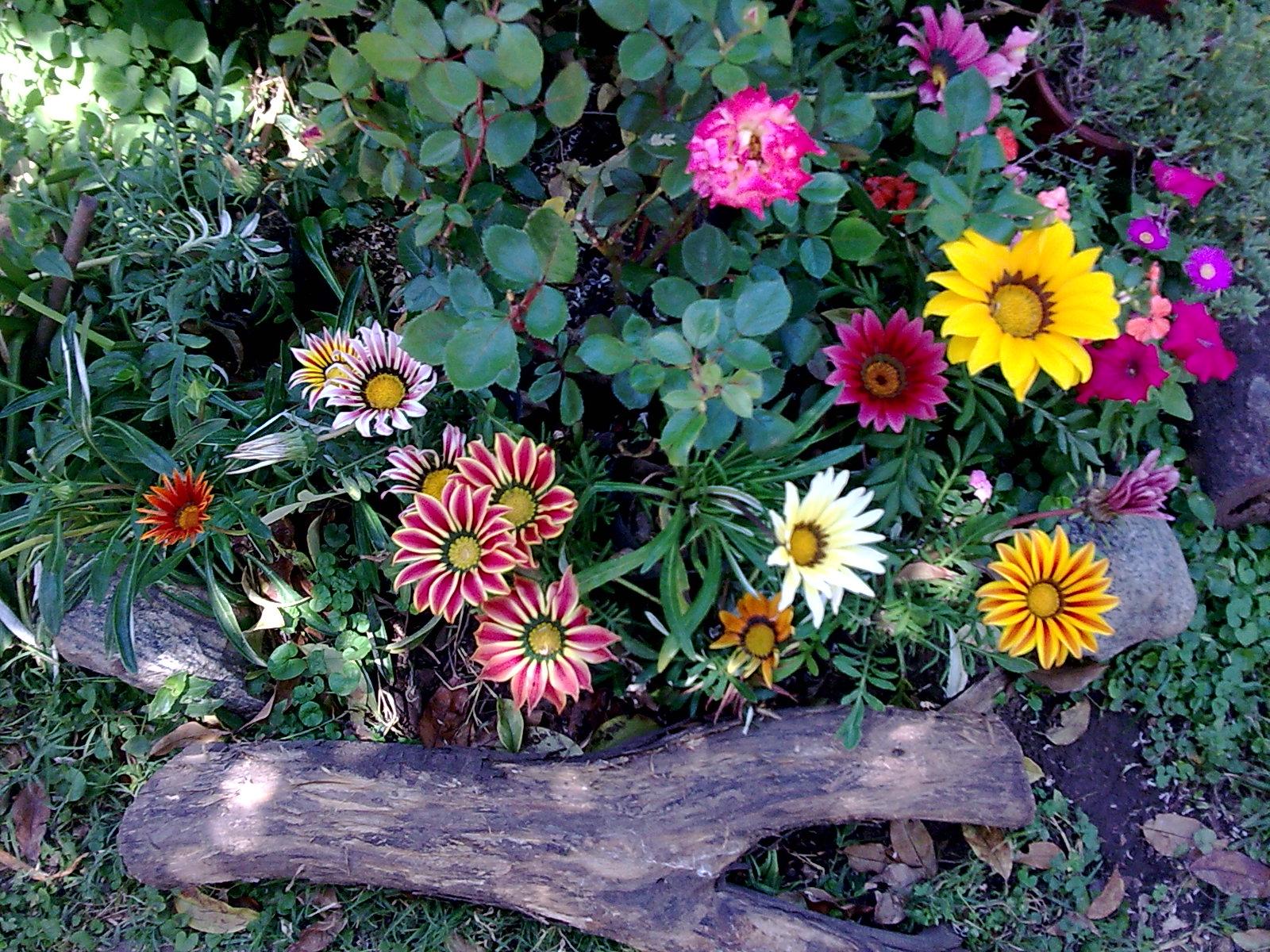 El riego for Arbustos para jardin con flores