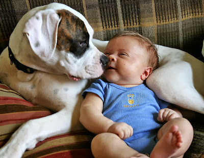 Cute Baby Pet Pictures