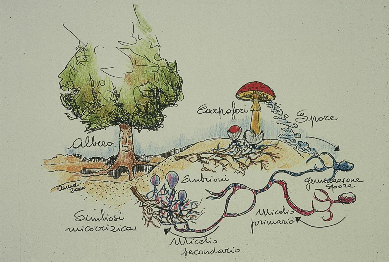 Fungos de gallaecia y norte de lusitania nociones basicas for Como se cocinan las setas