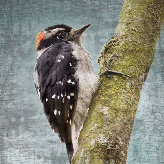 https://www.etsy.com/listing/161663617/fluffy-little-downy-woodpecker-with-red?ref=shop_home_active_2