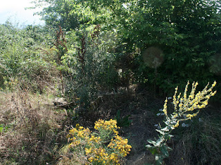 Spot the silver birch sapling