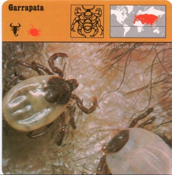 Blog Safari Club, la Garrapata, su picadura puede causar una meningitis mortal