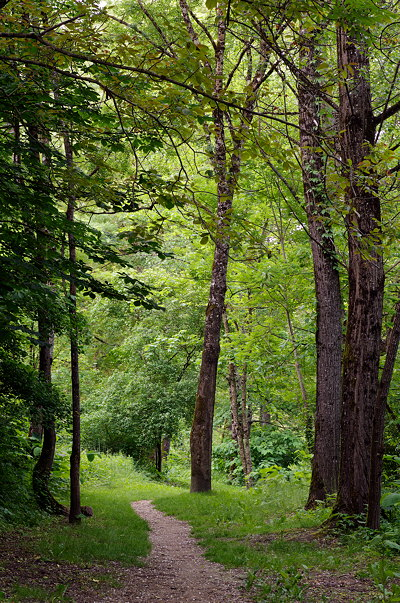 Photograph of a little path through the green springtime forest