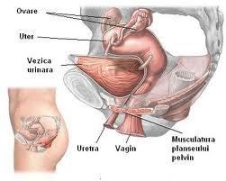 Informatii medicale despre incontinenta urinara