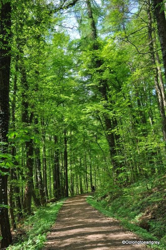 Forest Walk in Frauenstein, Weisbaden