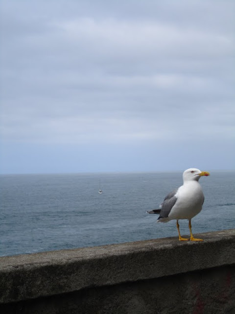 Seagull, Cinque Terre, Italy.
