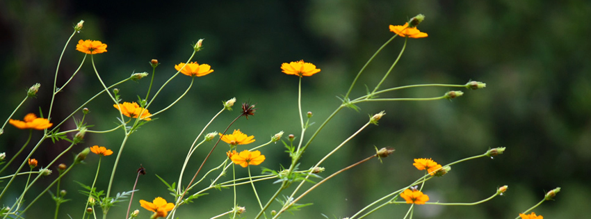 Yellow flowers in green background Facebook cover