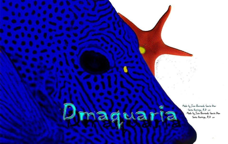 DMAQUARIA (Dominican Marine Aquariums)