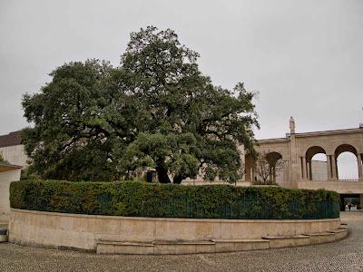Santuario de Fátima. La Encina Grande (Azinheira Grande)
