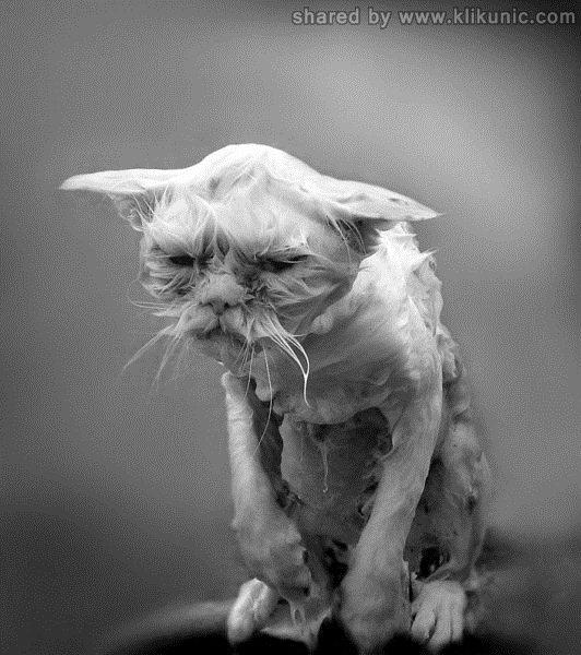 http://3.bp.blogspot.com/-6eSt-p-1OhM/TXhGjQDzKmI/AAAAAAAAQhw/4iAeQsS74pY/s1600/these_funny_animals_632_640_34.jpg