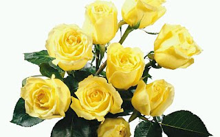 Fotos de Rosas Amarillas, parte 2