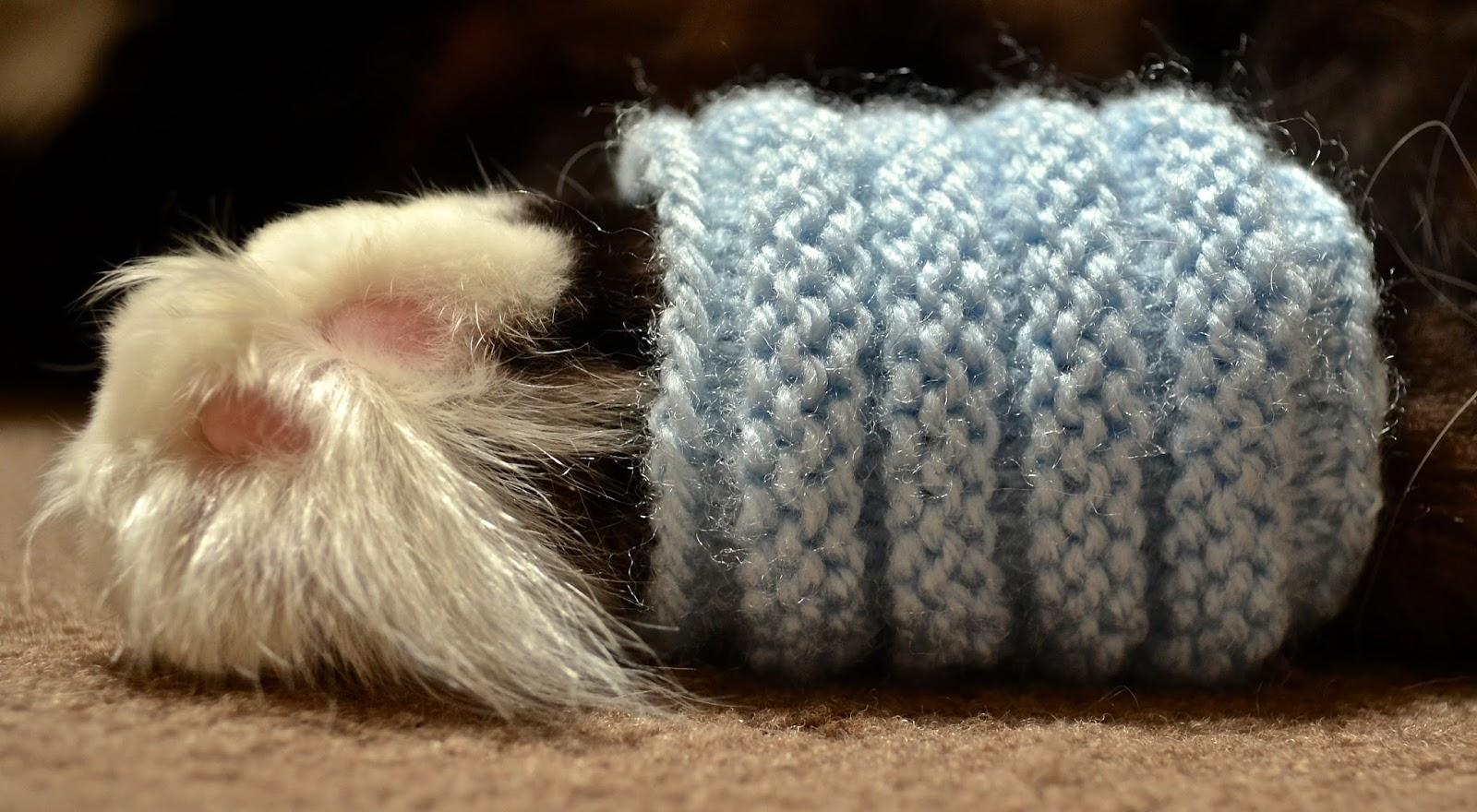 Knitting Rib Stitch In The Round : Knitting Novice: Cartridge Rib Stitch in the Round + Cat = Cat Leg Warmer