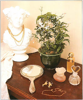 Сидя за туалетным столиком, насладитесь тонким ароматом Жасмина многоцветкового (Jasminum polyanthum)