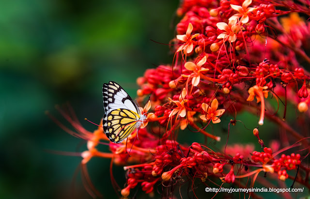 Butterfly Park at Bannerghatta National Park