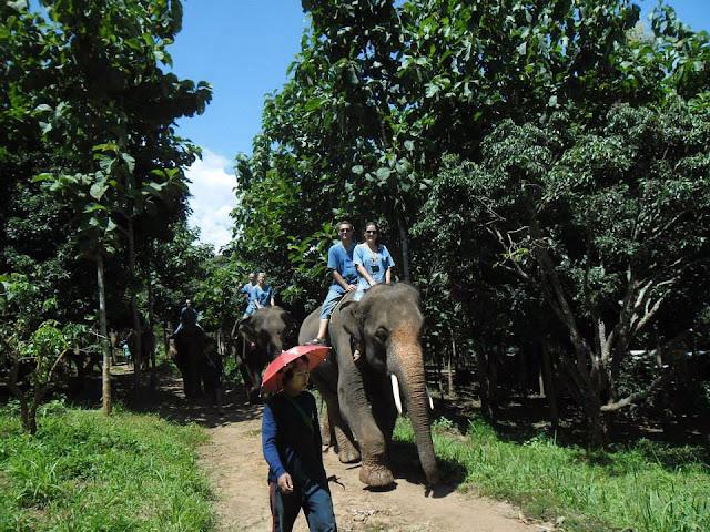 elefantes en Chiang Mai
