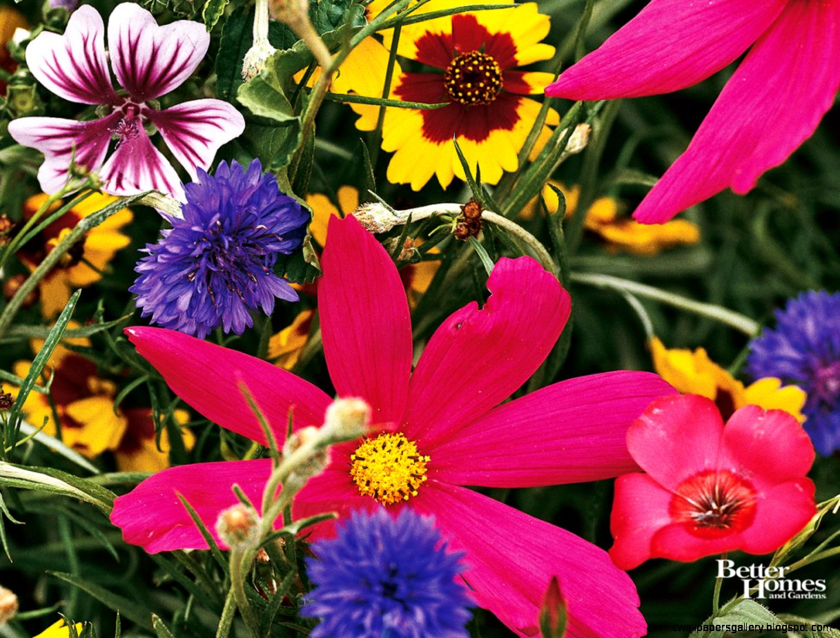 Summer Wildflowers Wallpaper   WallpaperSafari