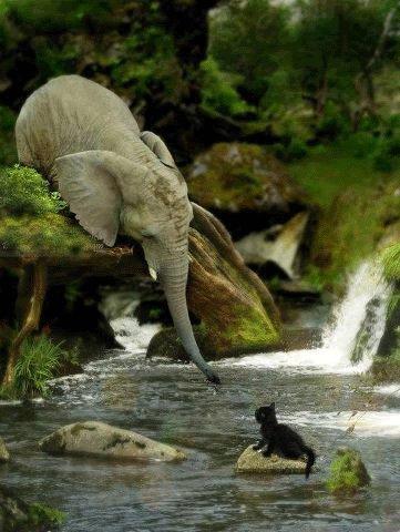 animal love animal