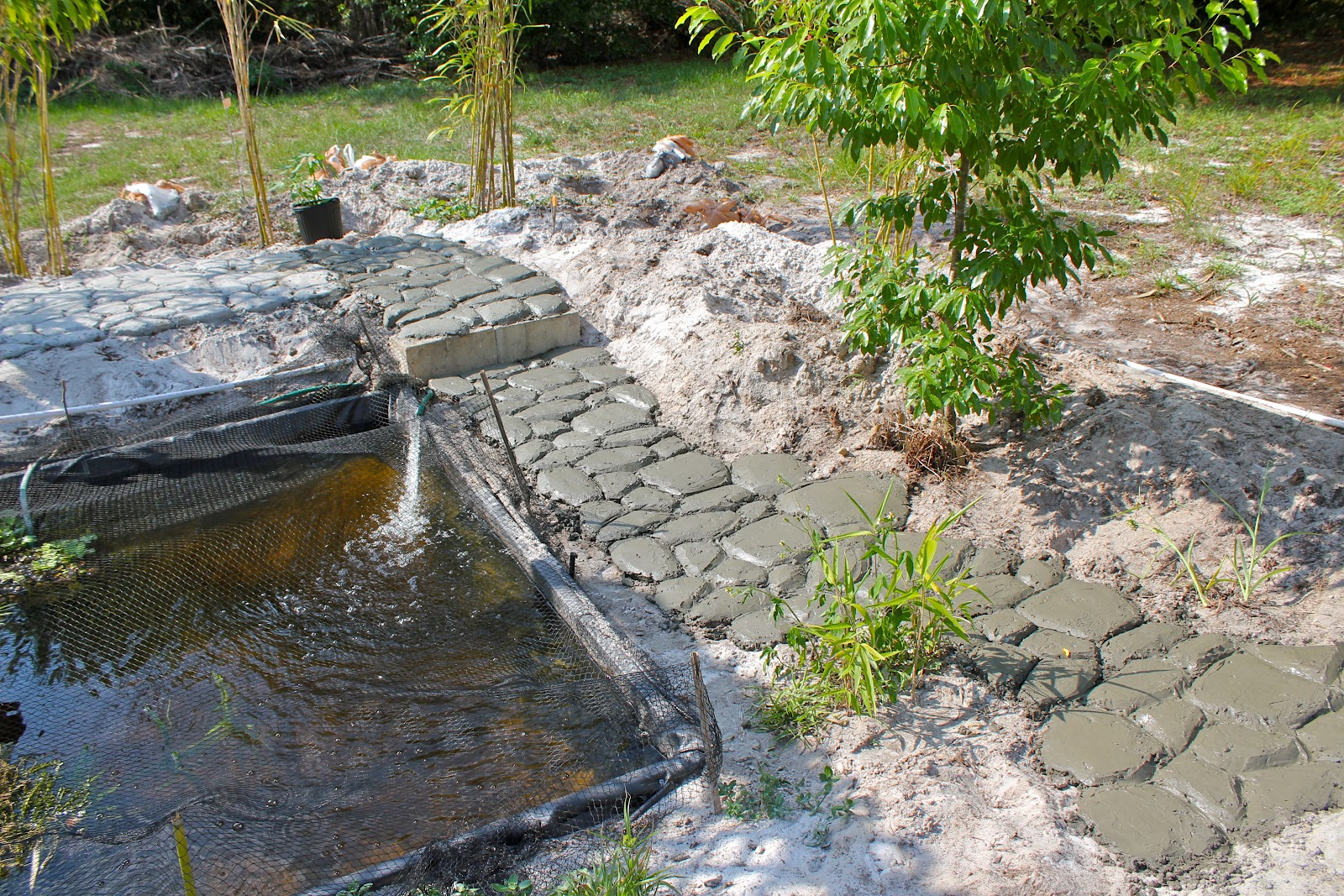 Fiercely hot florida phillip 39 s natural world for Concrete pond construction