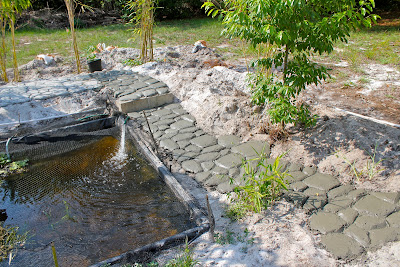Fiercely hot florida phillip 39 s natural world for Koi pond builders near me