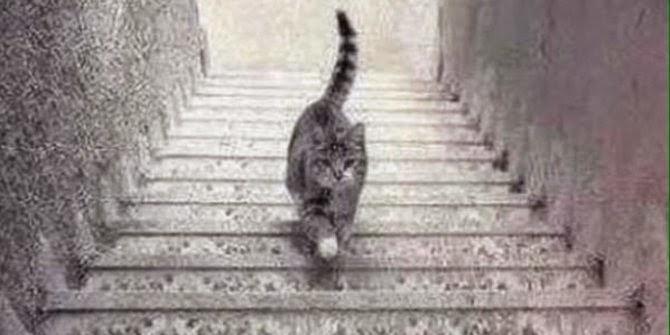 Debat terpanas di dunia kucing ini naik atau turun tangga